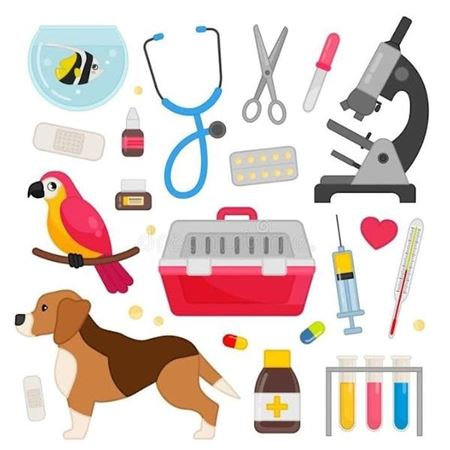 Picture for category Veterinary supplies industry